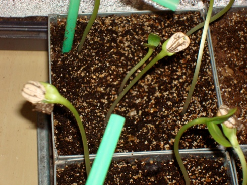 small_plants3